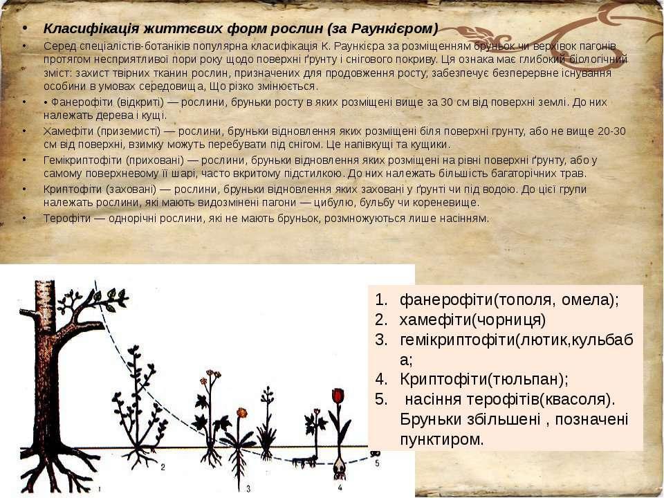 Класифікація життєвих форм рослин (за Раункієром) Серед спеціалістів-ботанікі...