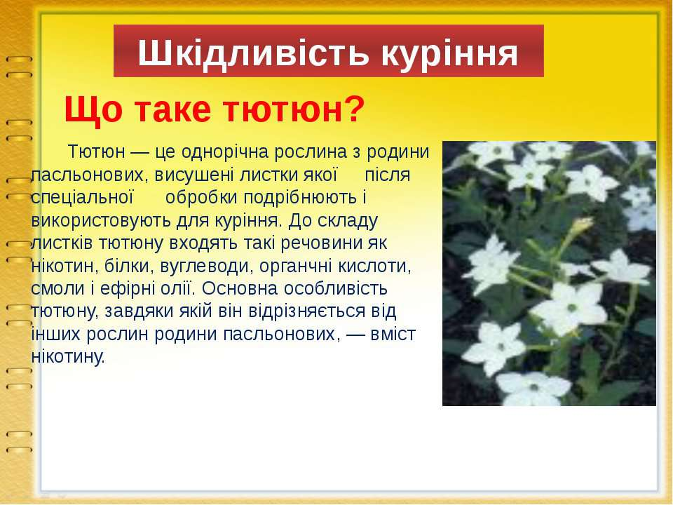 Шкідливість куріння Що таке тютюн? Тютюн — це однорічна рослина з родини пасл...