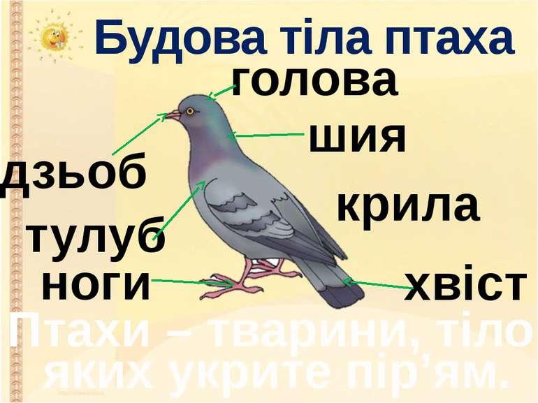 Будова тіла птаха дзьоб голова шия тулуб крила хвіст ноги Птахи – тварини, ті...