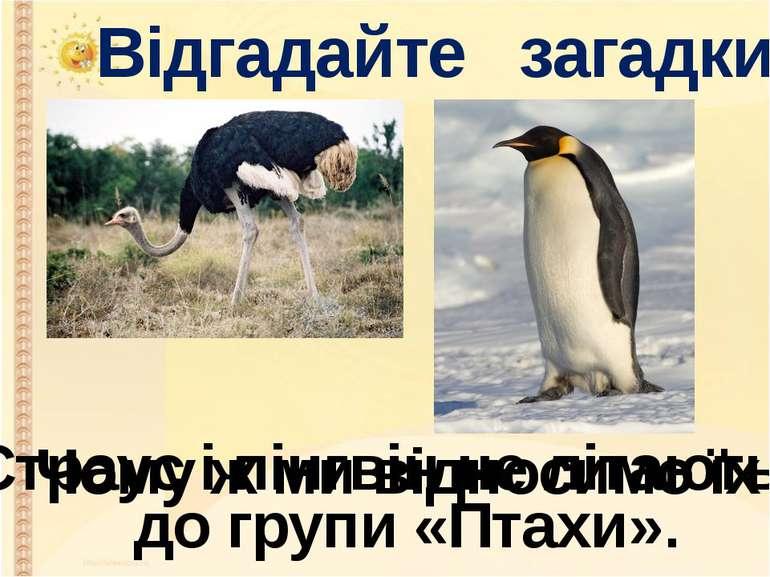 Відгадайте загадки Страус і пінгвін не літають. Чому ж ми відносимо їх до гру...