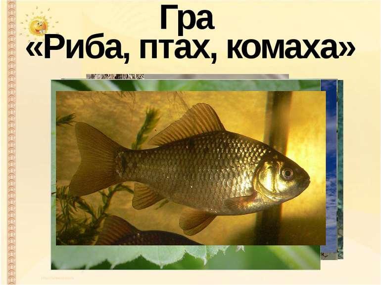 Гра «Риба, птах, комаха»