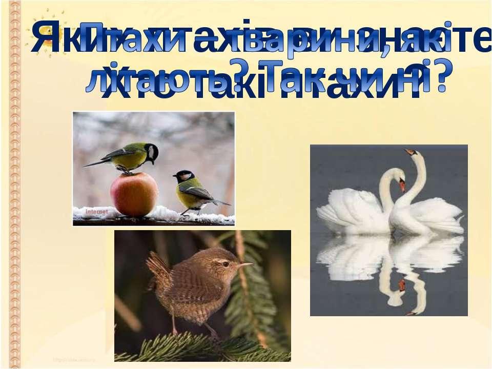 Яких птахів ви знаєте? Хто такі птахи?