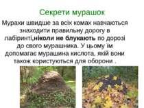 Секрети мурашок Мурахи швидше за всіх комах навчаються знаходити правильну до...