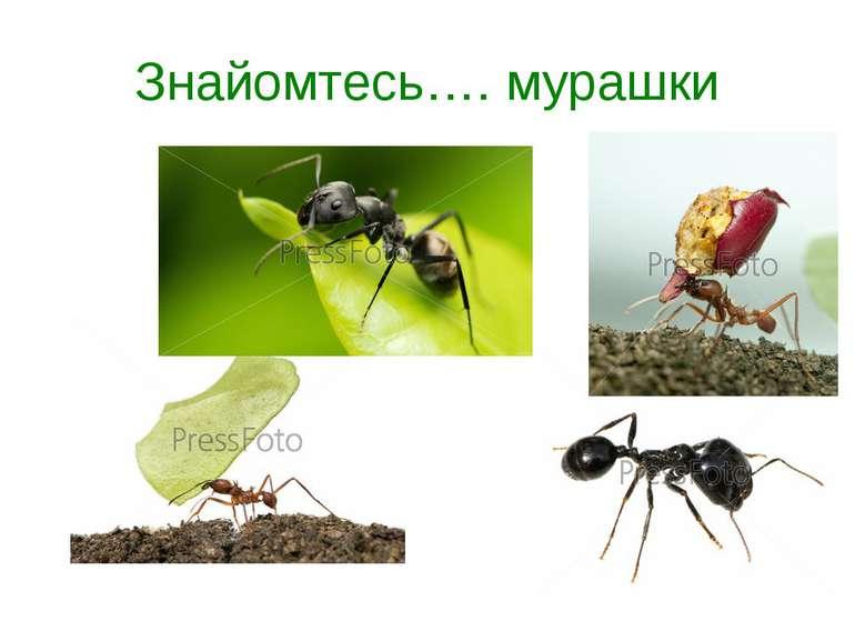 Знайомтесь…. мурашки