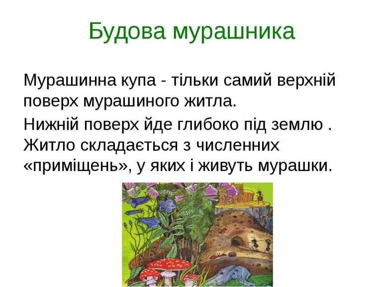 Будова мурашника Мурашинна купа - тільки самий верхній поверх мурашиного житл...