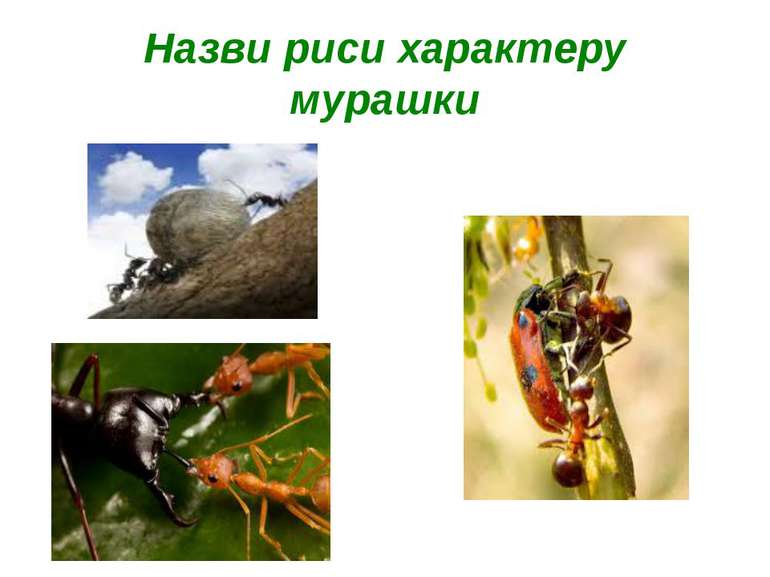 Назви риси характеру мурашки