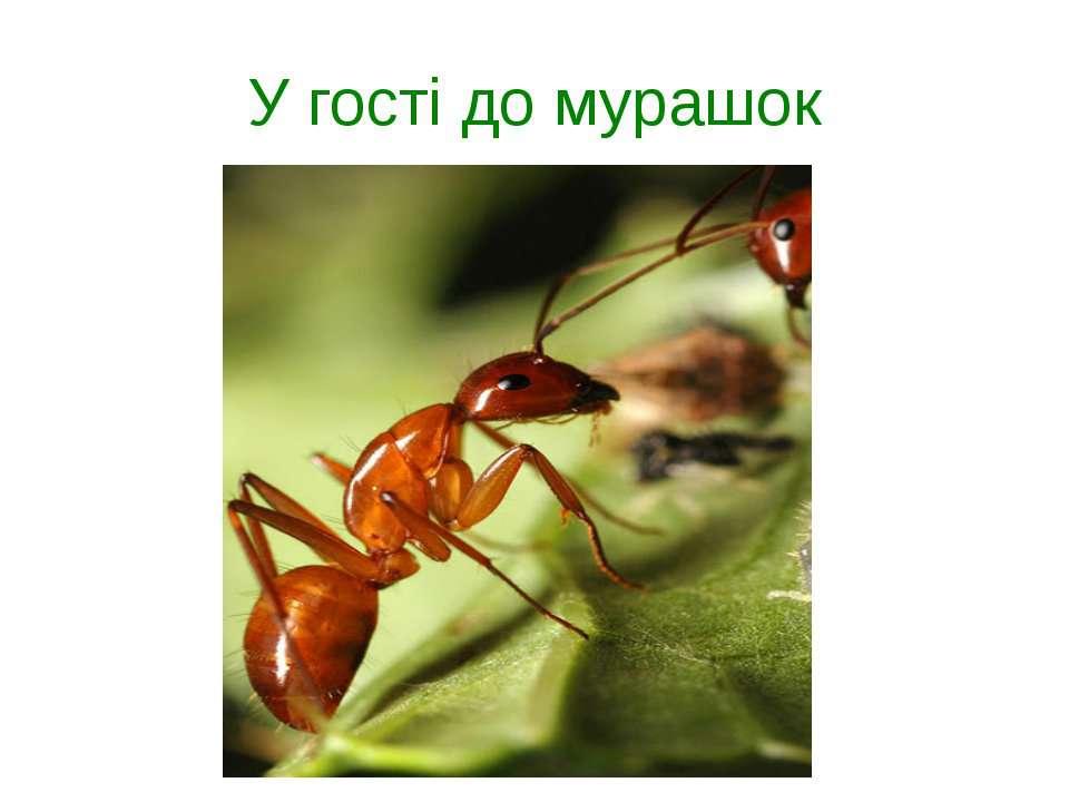 У гості до мурашок