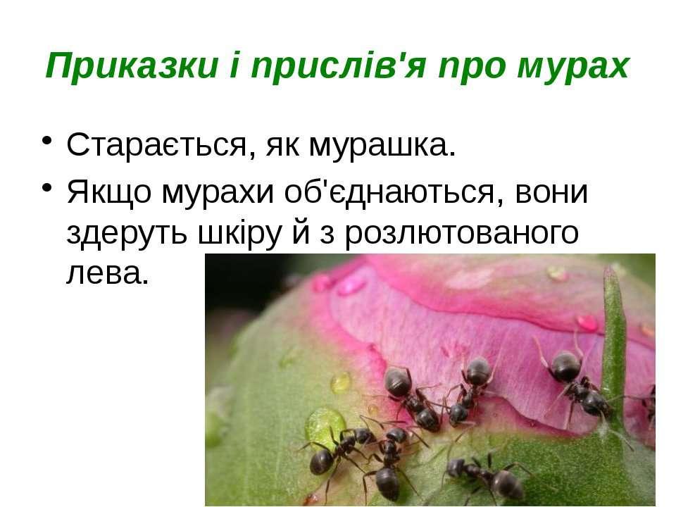 Приказки і прислів'я про мурах Старається, як мурашка. Якщо мурахи об'єднають...