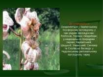 Де охороняється Охороняється у Карпатському біосферному заповіднику, у при ро...