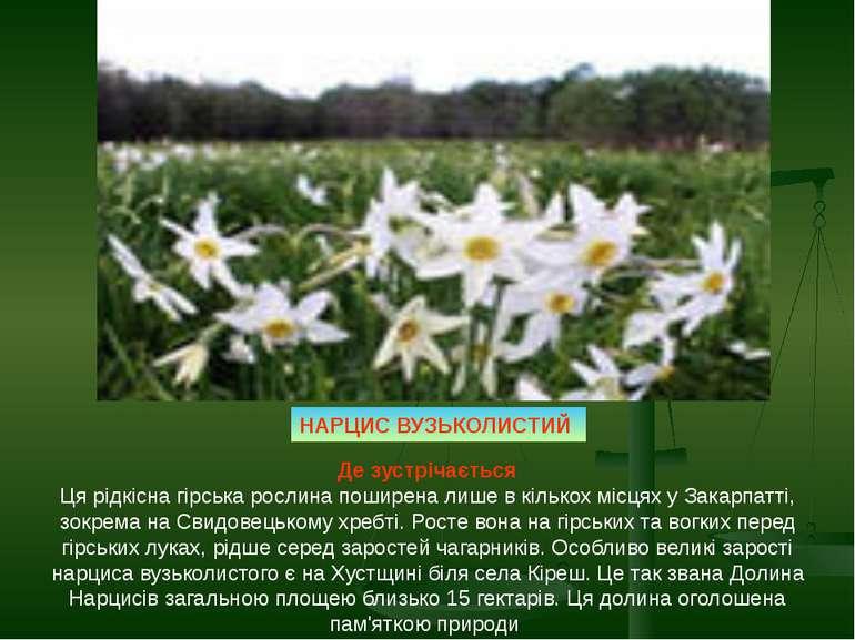 Де зустрічається Ця рідкісна гірська рослина поширена лише в кількох місцях у...