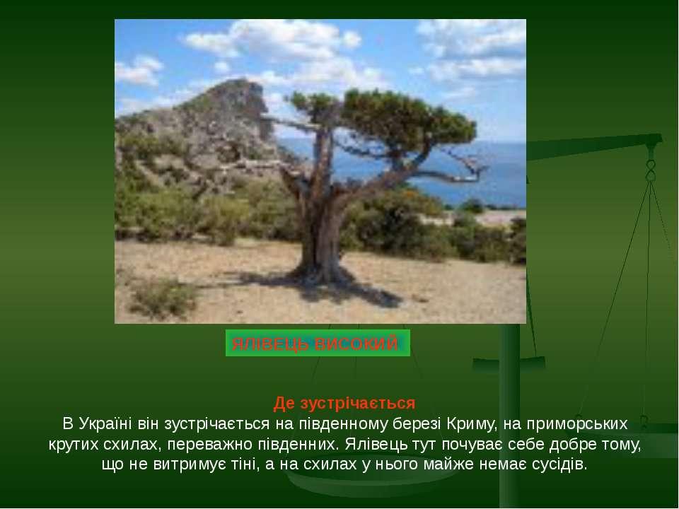 ЯЛІВЕЦЬ ВИСОКИЙ Де зустрічається В Україні він зустрічається на південному бе...