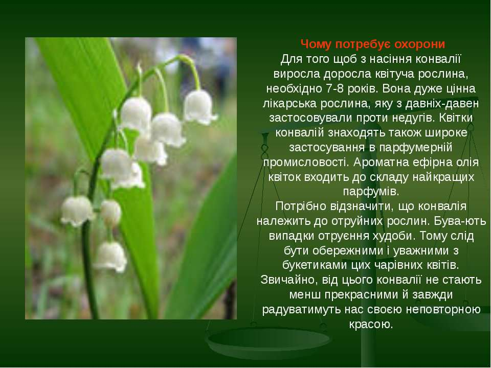 Чому потребує охорони Для того щоб з насіння конвалії виросла доросла квітуча...