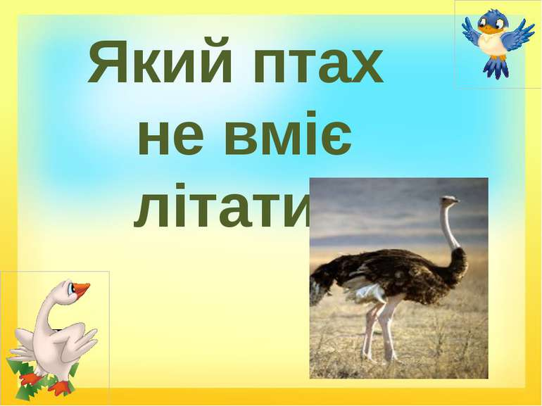 Який птах не вміє літати?