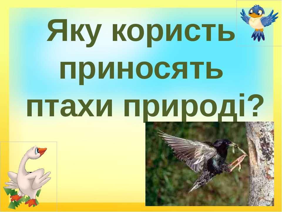 Яку користь приносять птахи природі?