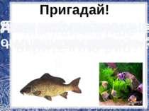 Пригадай! Яких тварин ми називаємо рибами? Без чого не можуть жити риби? Для ...