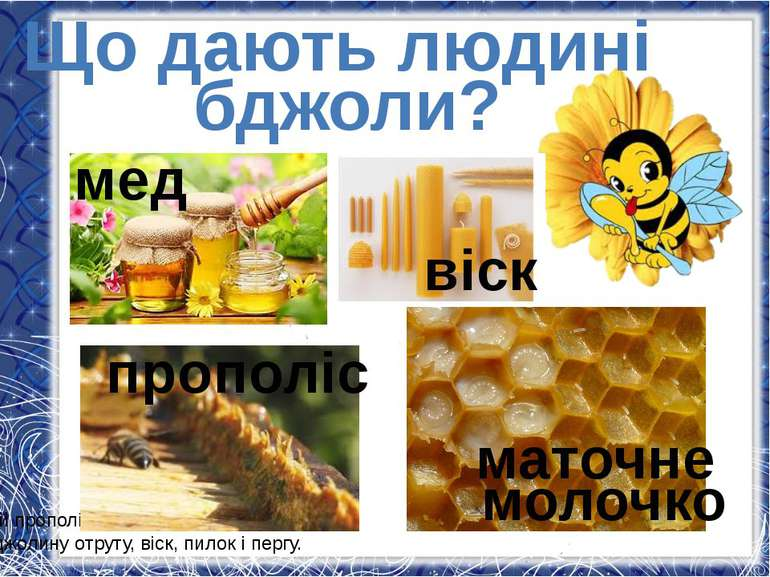 Що дають людині бджоли? а й прополіс, маточне молочко, бджолину отруту, віск,...
