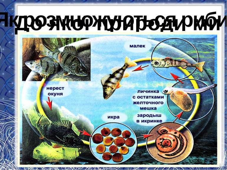 До якої природи ми відносимо риб? Як розмножуються риби?