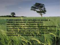 У разі навмисного заподіяння шкоди, а також у випадках, передбачених законода...