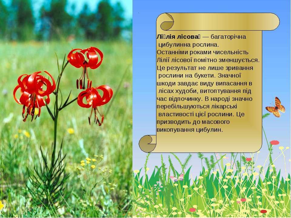 Лі лія лісова — багаторічна цибулинна рослина. Останніми роками чисельність Л...