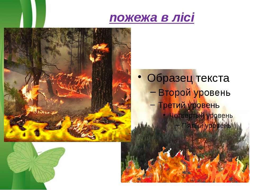 пожежа в лісі