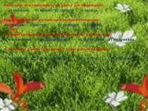 Який овоч Фея перетворила на карету для Попелюшки? а) кабачок; б) кавун; в) г...