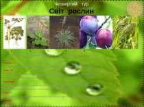 Четвертий тур Світ рослин 1 2 3 4 5 Ця рослина невибаглива. Стародавні греки ...