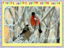 Крізь зимові заметілі Пташенята прилетіли. В них червоні гарні груди – Ніби я...