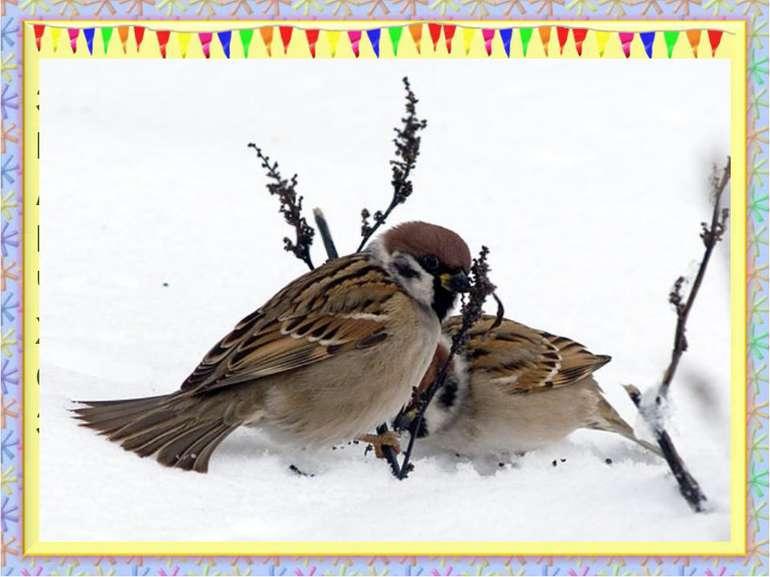 За вікном летить сніжок, Піднялася віхола. Але бачу я пташок Що сидять під ст...