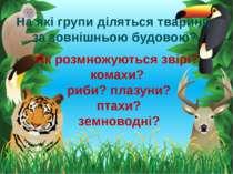 На які групи діляться тварини за зовнішньою будовою? Як розмножуються звірі? ...