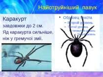 Найотруйніший павук Каракурт зав�