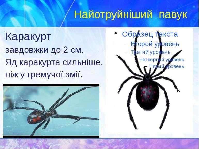 Найотруйніший павук Каракурт завдовжки до 2 см. Яд каракурта сильніше, ніж у ...