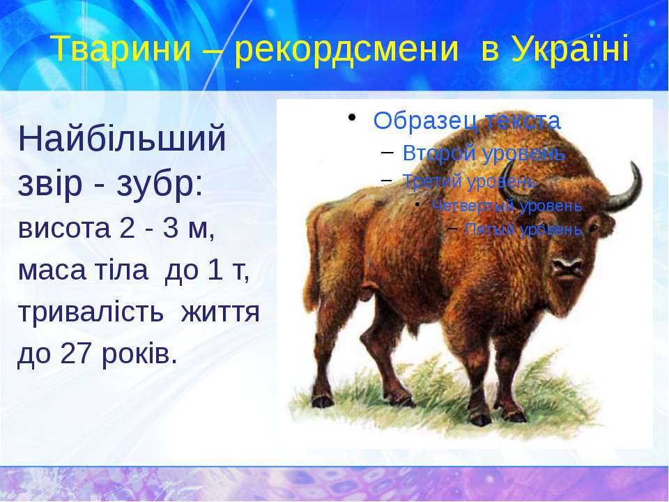 Тварини – рекордсмени в Україні Найбільший звір - зубр: висота 2 - 3 м, маса ...