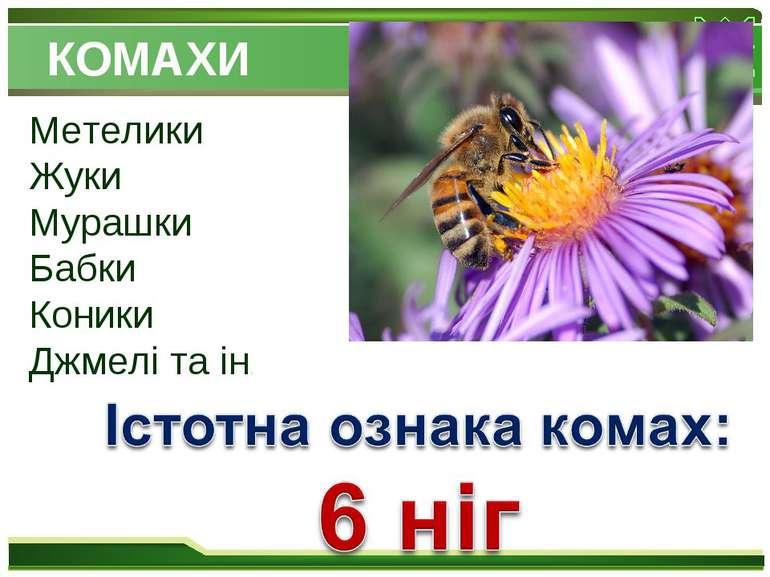 КОМАХИ Метелики Жуки Мурашки Бабки Коники Джмелі та ін.