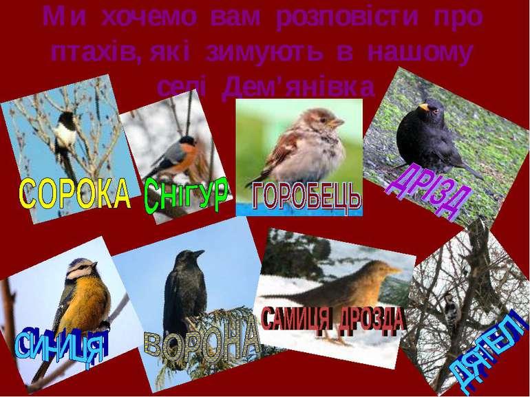 Ми хочемо вам розповісти про птахів, які зимують в нашому селі Дем'янівка