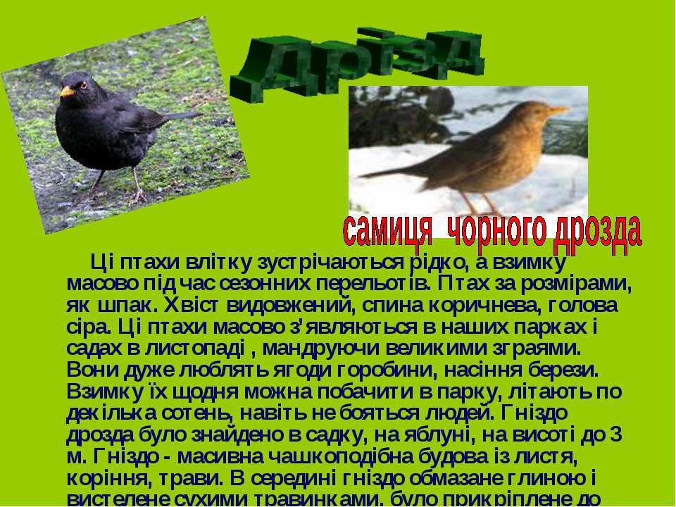 Ці птахи влітку зустрічаються рідко, а взимку масово під час сезонних перельо...