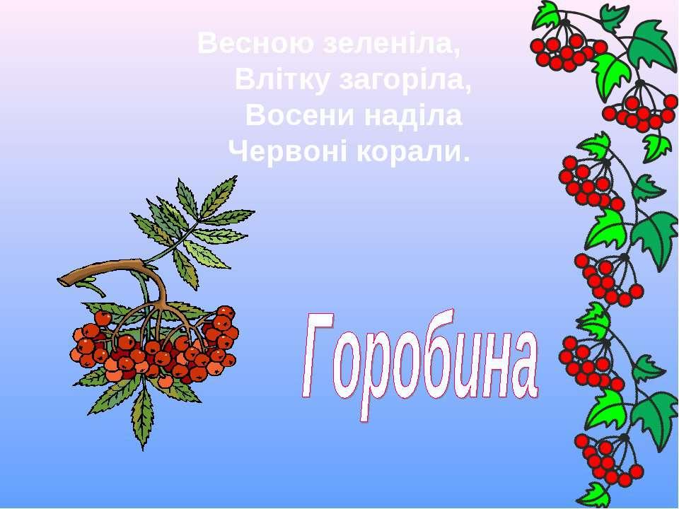 Весною зеленіла,  Влітку загоріла,  Восени наділа  Червоні корали.