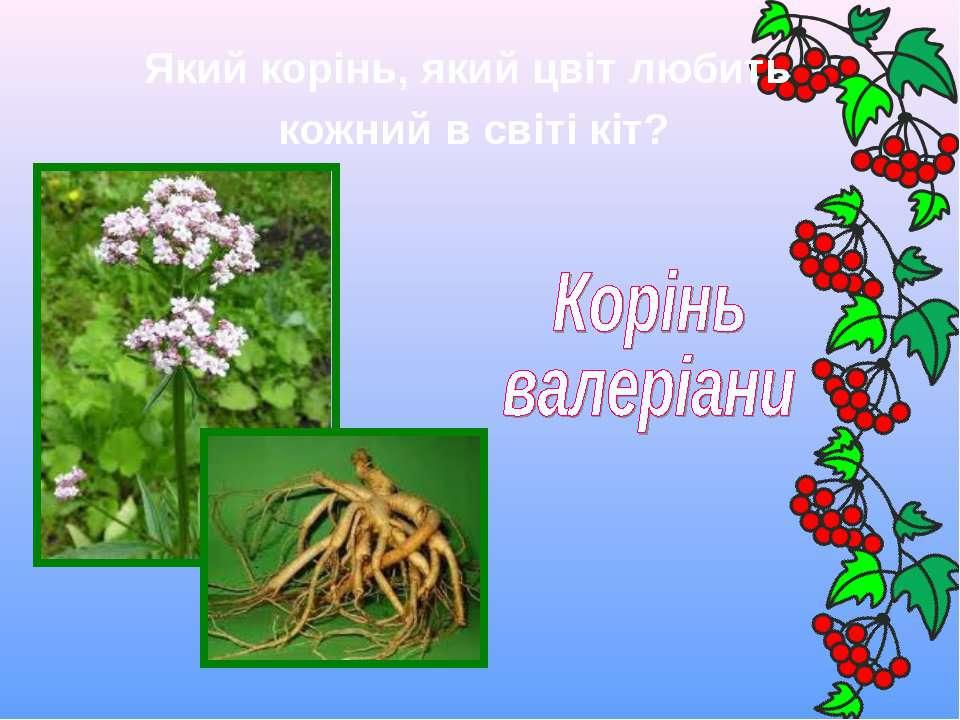 Який корінь, який цвіт любить кожний в світі кіт?