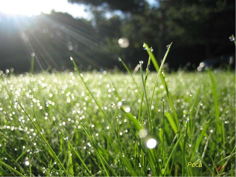 Крапельки водички зранку На травичці, по землі... Грають в барвах на світанку...