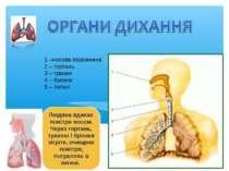1 –носова порожнина 2 – гортань 3 – трахея 4 – бронхи 5 – легені Людина вдиха...
