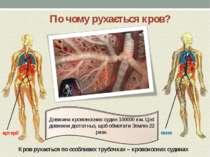 Кров рухається по особливих трубочках – кровоносних судинах артерії вени По ч...