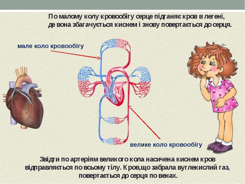 По малому колу кровообігу серце підганяє кров в легені, де вона збагачується ...
