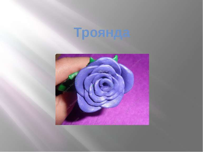 Троянда Налисник Г.П.