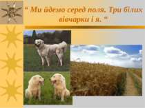 """"""" Ми йдемо серед поля. Три білих вівчарки і я. """""""