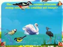 Яка найважливіша ознака відрізняє кожну пташку на слайдах від інших?