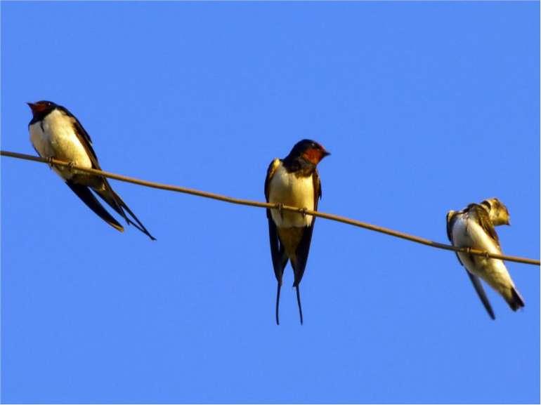 Відгадування загадок (завдання 1)Швидко скрізь цей птах літає,безліч мошок по...