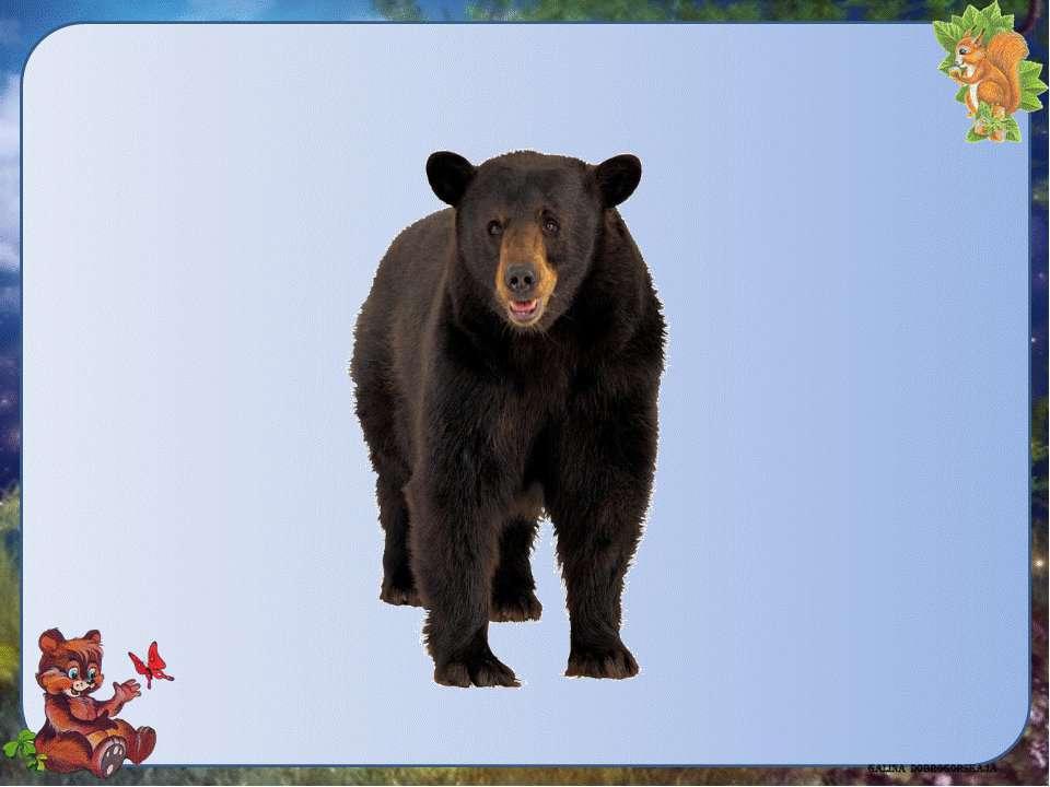 Бурыймедведь