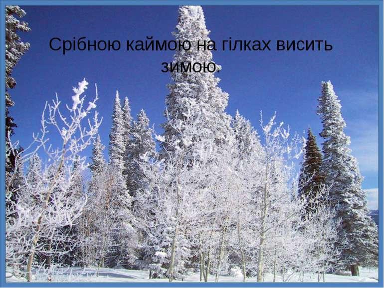 Срібною каймою на гілках висить зимою.