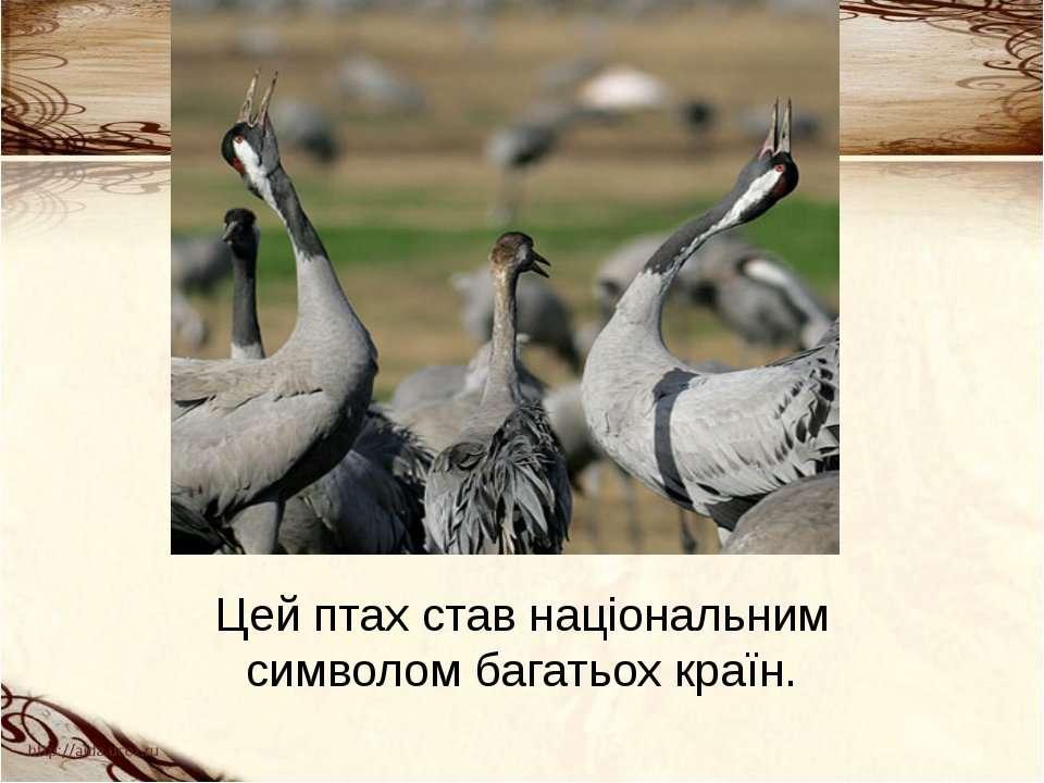 Цей птах став національним символом багатьох країн.