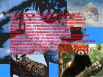 Результатом дії рушійних сил еволюції є відносна пристосованість видів до умо...