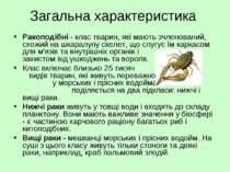 Загальна характеристика Ракоподібні - клас тварин, які мають зчленований, схо...